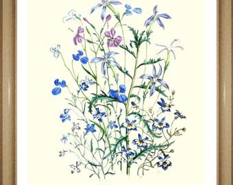 "Botanical Print.  Lobelia  Print #1.  Blue Flower Print. Botanical Wall Art. 5x7""  8x10"" 11x14"""