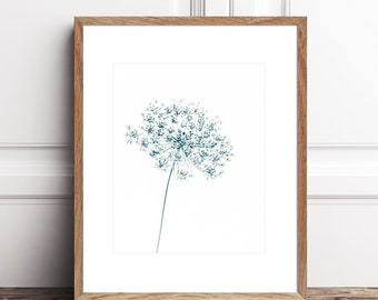 Botanical Print Queen Annes Lace Printable Art, Flower Photography Download