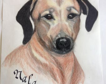 Pet Portraits in Pencil and Charcoal
