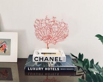 Fächerkoralle auf Sockel - Koralle - hochwertige Dekoration
