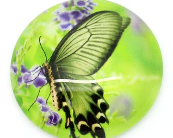 Butterfly pattern on bottom spring 30mm glass CABOCHON