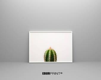 Cactus Printable, Digital Download Print, Macro Art Print, Mint Green Wall Art, Botanical Poster, Succulent Print, Nursery Decor, Pastel Art