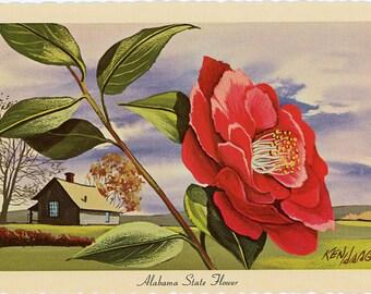 Alabama State Flower - Camellia Vintage Postcard Signed Artist Ken Haag (unused)