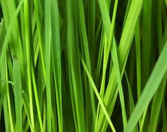 Fresh Cut Grass Fragrance Oil - 1 pound 8 ounces