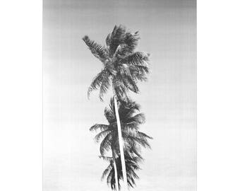 Black and White Palm Tree Print, Vintage Palm Tree Art, Palm Tree Photography, Black and White Vintage Palm Tree Wall Art