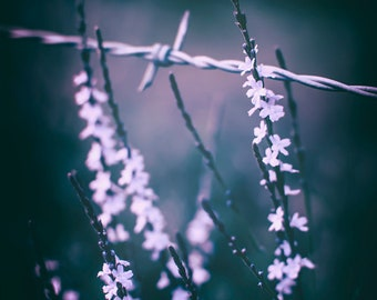 Purple Flower Print   Country Rustic Fence Barbed Wire Magical Photograph Delicate