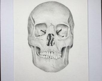 Original skull drawing
