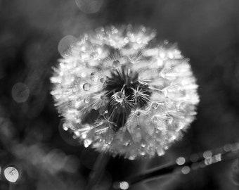 Pollen in the Dew