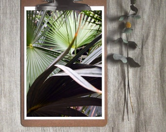 No. 4 Palm   A4/A5/A6  Botanical, Gardens, Tropical Photography, Sustainable Prints