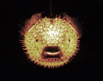 "HUGE 17"" Hanging Puffer Fish Light Real Blowfish Lamp Taxidermy Animal Pendant Lighting Tiki Bar Nautical Decor LIghting"