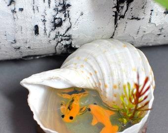 OOAK Miniature Koi Pond, Fairy Garden Koi Pond, Seashell Pond, Miniature Doll House Accessory, Polymer Clay Koi Fish, Miniature Garden