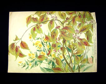 Vintage Japanese Print - Vintage Print - Bird Print - Flower Print - Vintage Magazine Insert - Magazine Cut Out - Japanese Beautyberry