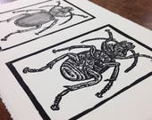 Beetles linocut print art...