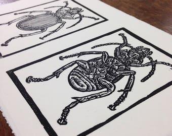 Beetles linocut print art print block print bugs insects