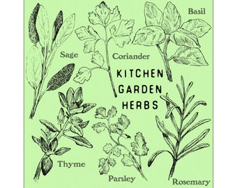 Kitchen Garden Herbs - Fine Art Giclee Print for the home...  perfect for a cook or gardener
