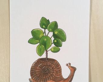 Postcard Pilea in snailplanter