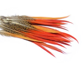 """Red Tipped Golden Pheasant Feathers 6-8"""" 