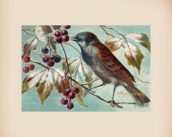 Bird With Berries New 4x6 Vintage Image Photo Print FN04