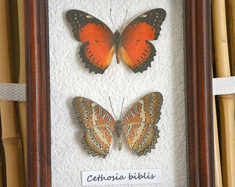Home Decor Framed Natural Tropical Butterflies Red Cethosia Biblis
