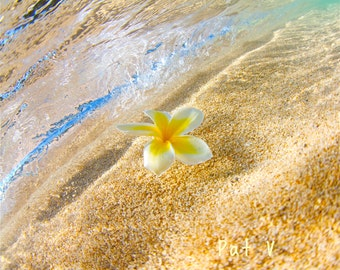 Yellow Plumeria Under Waves,Hawaiian Flower Photography Underwater,Seashore Photo Decor,Oahu Memorabilia Photo,Hawaii Diving Art,Snorkeling