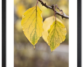 Fine art Yellow leaves at the branch-fall motive-canvas or paper print-home decor hall,dining room-macro picture-8x12, 12x18, 18x24 or 24x36