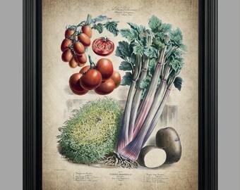 Vintage Vegetables Print - Vegetable Illustration - Kitchen Art - Home and Garden Decor - Vintage Poster - Wall Art #C-004