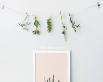 Succulent art print - Cactus wall art  - Minimalist succulent - Cactus photography - Cacti wall art - Succulent print - Botanical wall art
