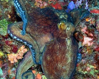 Oktopus-Dekor-Unterwasser-Fotografie Druck Meeresbiologie