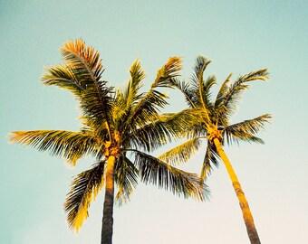 Palm Tree Photography, Beach Decor, Fine Art Photograph, Turquoise Wall Art, Nature, Travel, Coastal Home Decor, Tree Print, Key West Art