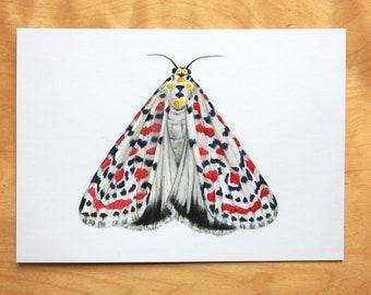 Original Entomology Art, A6 Moth Drawing, Butterfly Arwork, Wildlife Animal Portrait, Realistic Insect, Scientific Illustration