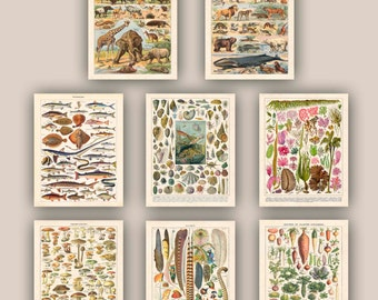 Educational art, botanicals posters, natural science prints, mamals, fishes, mollusk, feathers.seaweeds, vegetables, mushrooms,  11x14