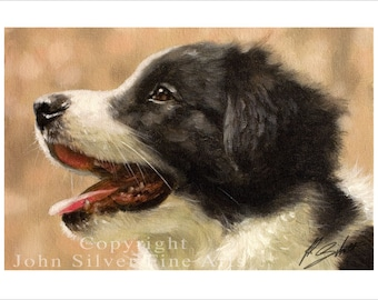 Border Collie Puppy Dog Portrait by award winning artist JOHN SILVER. Personally signed A4 or A3 size Print. BC010SP