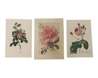 Vintage Prints of Roses - Set of 3