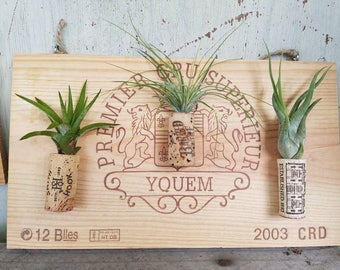 French Wine Crate hanging planter with 3 tillandsia air plants