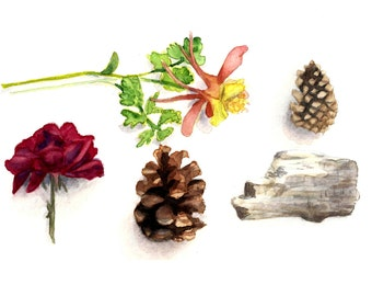 Flower and Pinecone Print 8 x 10