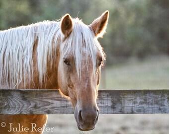 Palomino Horse Photography Equestrian Art