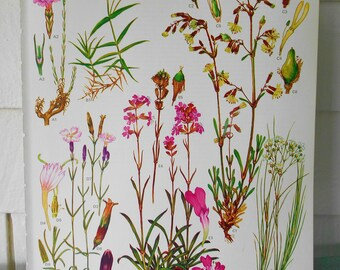"""Botanical, 9X12 illustration page #13 from """"Wild Flowers of the World"""" 1970"""