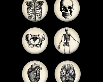 Anatomy Pins or Anatomy Magnets Piano Magnets Medical Gift Anatomy Decor Refrigerator Magnets