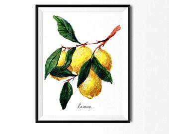 Lemon Print, Citrus Art, Food Illustration, Botanical Art, Kitchen Decor, Fruit Painting, Lemon Painting, Citrus Print, Lemons Painting,