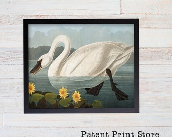 James Audubon American Swan Art Print. Bird Print. Audubon Prints. Bedroom Art. Bird Artwork. Bird Print. Bird Art Print. Living Room.