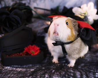 Vampire Guinea Pig Greeting Card
