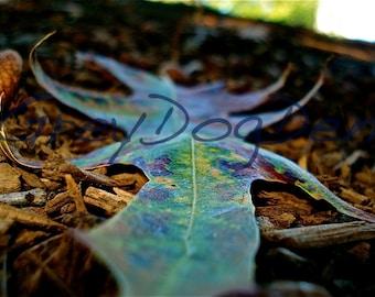 Colorful Summertime Leaf Fine Art Photo