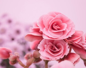 Pink flowers photograph Instant Download Photography pink blossoms nursery art