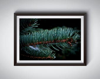 Needles, Instant Digital Download, Print at Home, Photography art wall decor