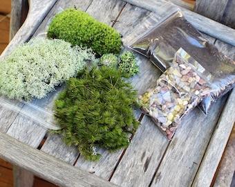 Terrarium kit-Live moss-Small DIY kit -Woodland Forest Fun-Mood moss-Pillow Moss-Reindeer Moss-Fruiticose lichen mound