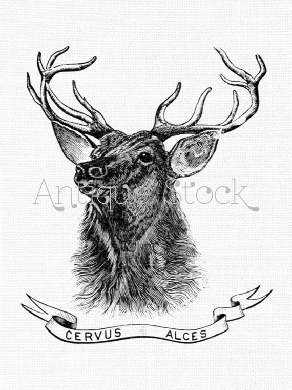 Deer Clipart Cervus Alces Antique Elk Stag Wapiti