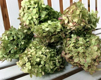 DRIED Hydrangea Flowers 6 Lovely small green flowers with pink tinge flower head on stems Prim flowers Wedding flowers Shabby cottage floral