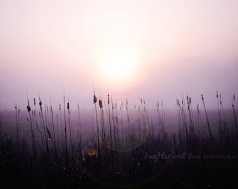 Sunrise Cattails Fine Art Photography Purple Eggplant Plum Lavender Lilac Black Sunset Sunflare Field Cattail Minimalist Home Decor Wall Art