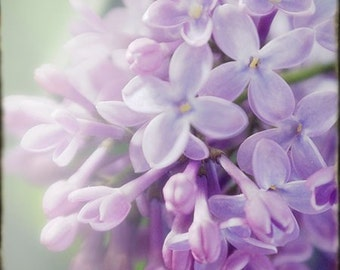 Lilac Print,  Lilac Photo,  Purple Flower Photography, Floral Art Print, Floral Wall Decor, Nursery Decor
