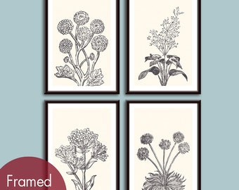 Wild Flowers Botanical Prints (Series C) Set of 4 - Art Poster Prints (Featured in Charcoal and Cream)
